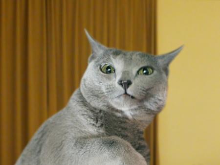 猫標識14
