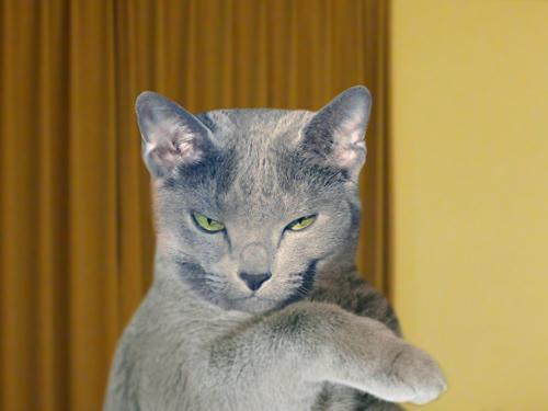 猫標識23