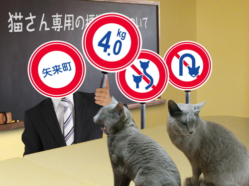 猫標識22