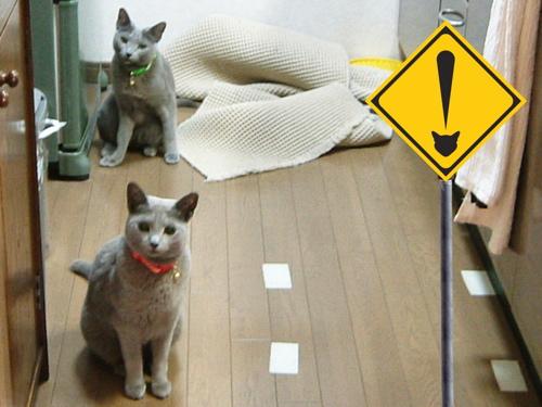 猫標識30