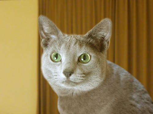 猫標識26