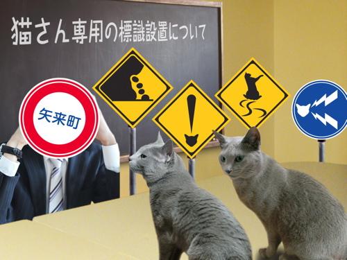 猫標識33