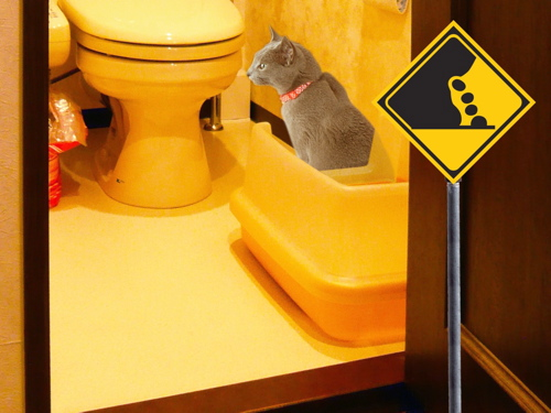 猫標識32