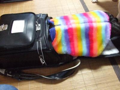 2007_1217モー子0019
