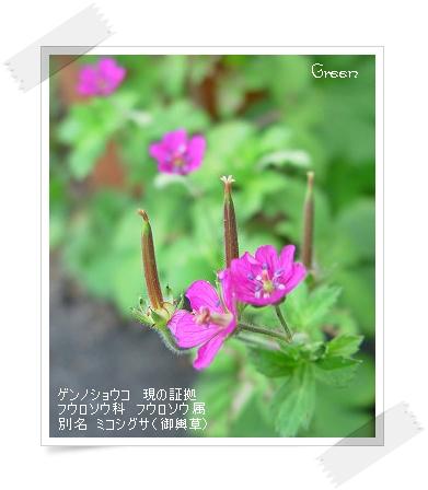 350genosyouko90830a1.jpg