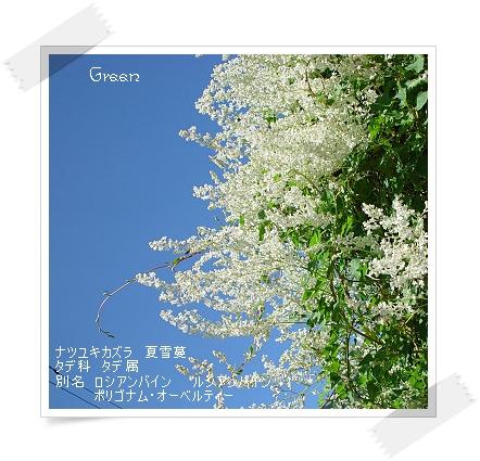 350natuyukikazura90918a2.jpg