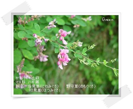 350yamahagi90822b1.jpg