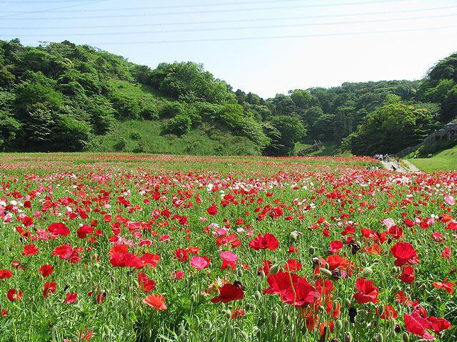 くりはま花の国2011