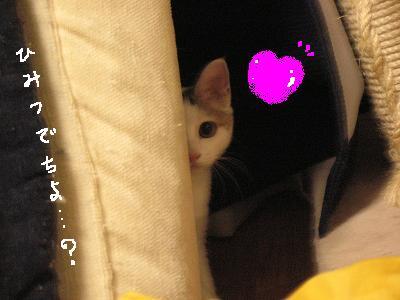 梅子…子猫の癖にやるなぁ?誘ってる(*´Д`*)