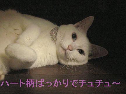 そして、不満を持つ猫・・・もつ鍋猫?いやぁ?Σ(-`Д´-;)