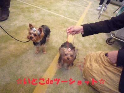 埼玉インター2