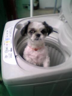 洗濯機の中