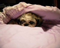 ようn the Bed