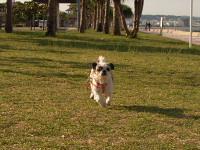 アラハビーチ公園