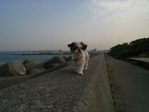防波堤歩く洋