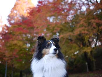 5公園の紅葉