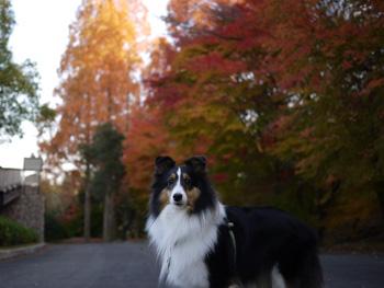 6公園の紅葉