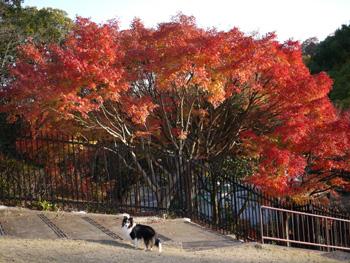 1公園の紅葉