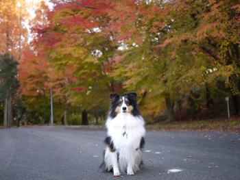 4公園の紅葉