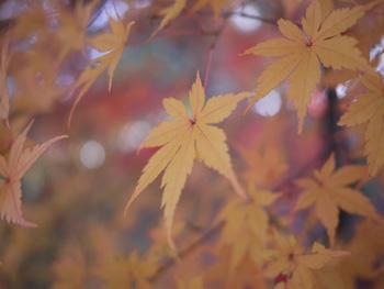 12公園の紅葉
