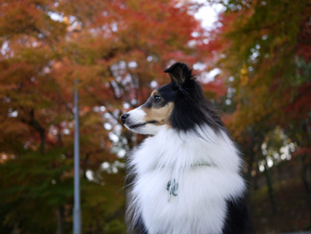 7公園の紅葉