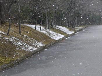 1雪とロウバイ