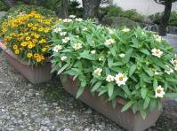 H230905夏の花