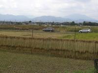 H230925稲刈り