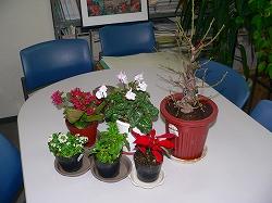 わが友となった華麗な植物たち