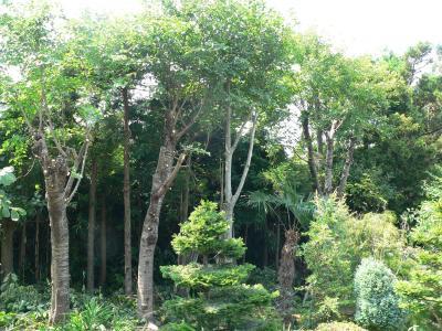 佐渡屋次郎の偉業により、明るく健康的になった西側南部の雑木林