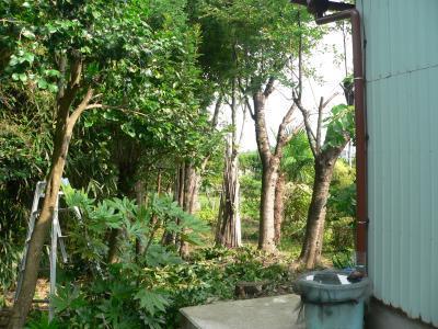 """佐渡屋次郎の頑張りによって、ジャングルから明るい雑木林に変わった""""畑の楽園""""の西側南部"""