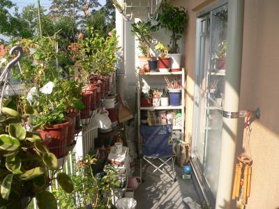 新たなベランダに移り、太陽の光を受ける植木たち