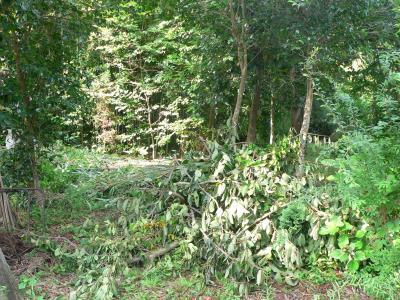 佐渡屋次郎の力によって、切り落とされていった雑木林の枝の山