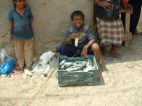 a boy selling fish in kamaran