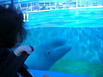 白イルカさん