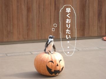 かぼちゃぺんぺん