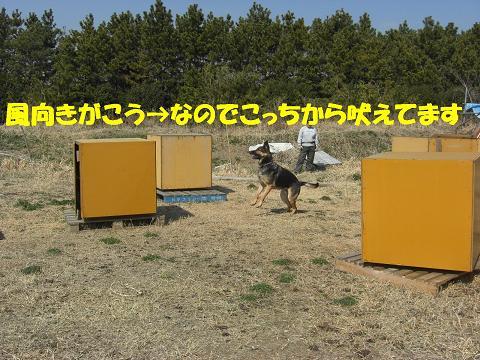 CIMG0961_sh01.jpg