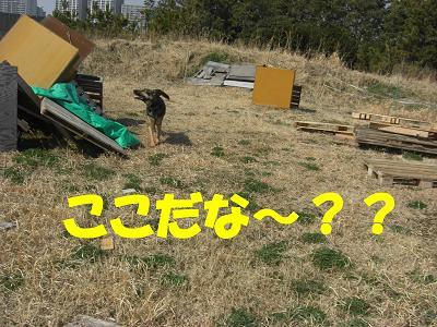 CIMG0972_sh01.jpg