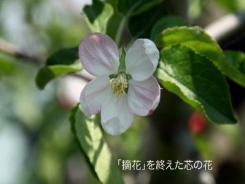 201105_008.jpg