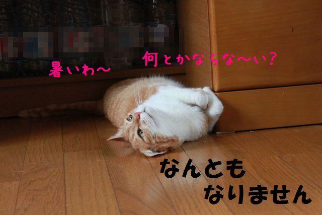 2011_06_24_9999_19a.jpg