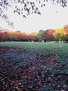 公園の紅葉!
