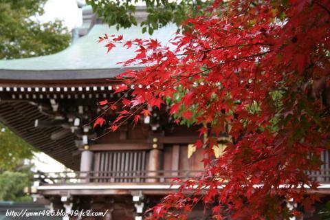 H神社と紅葉。