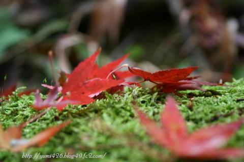 紅葉な秋♪