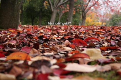 落ち葉の絨毯!