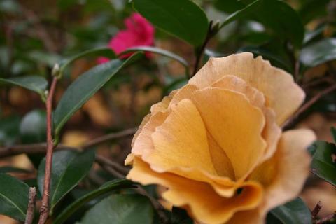 黄色い花が?w