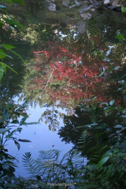 水に映るモミジの木も・・・