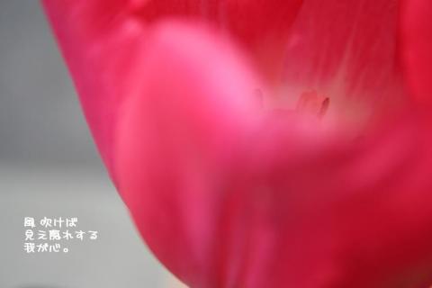 Tulip!