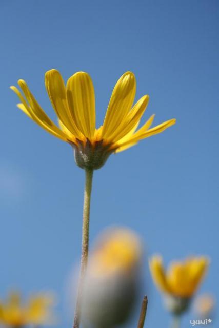 黄色いお花w