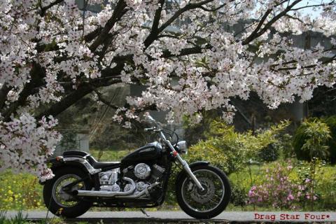 桜デートw