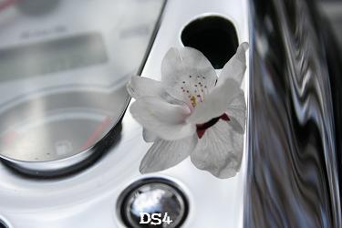 ドラスタくんと桜w